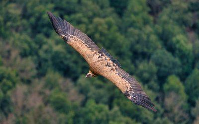 La migració dels ocells des de Collserola